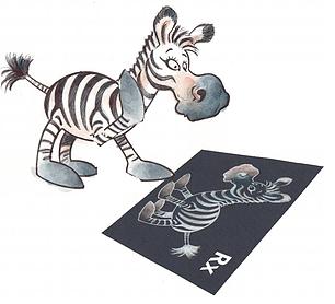 lozo zebra onlus